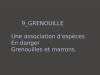 9_GRENOUILLE